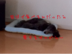 iphone/image-20110829151548.png